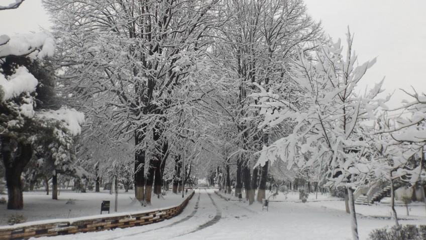 Burreli nën borë