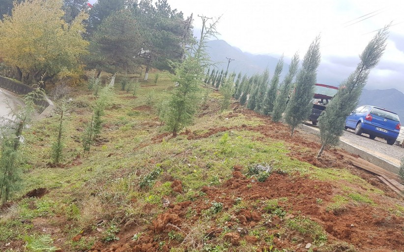 Ka filluar puna për mbjelljen e pemëve dekorative