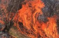 Fatkeqësisht janë evidentuar tre vatra zjarri në pyjet